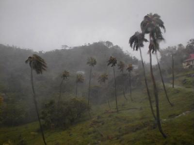 Rain and winds pick up
