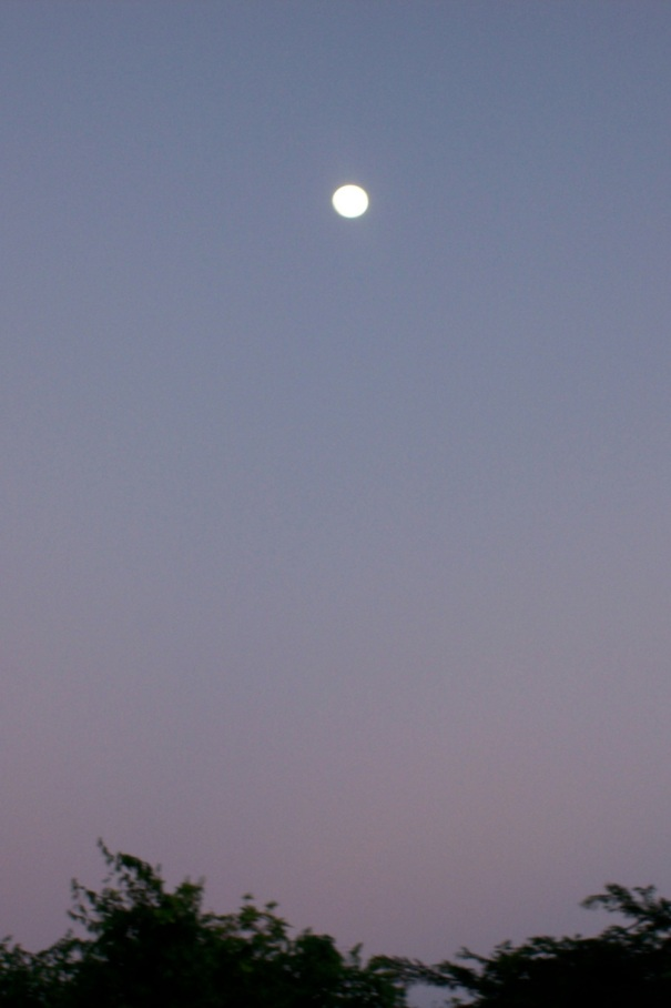 The moon high in the evening sky during the last full moon